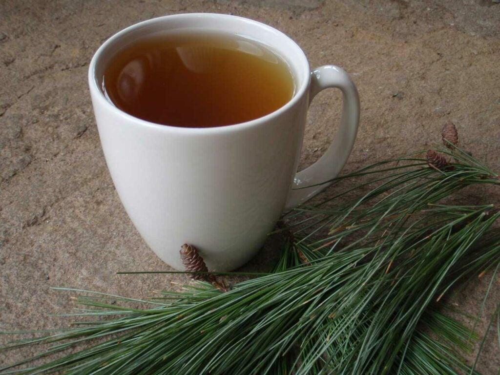 vitamin c pine needle tea.