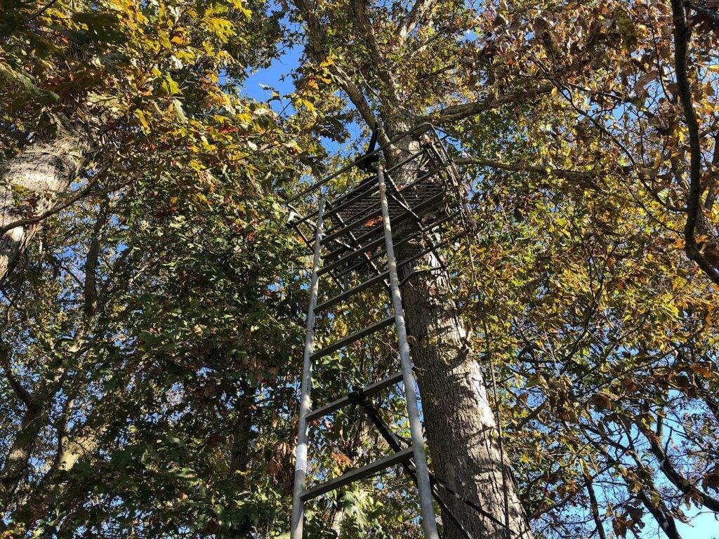 a treestand on a tree.