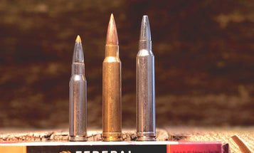 Best Cartridges for Africa Plains Game