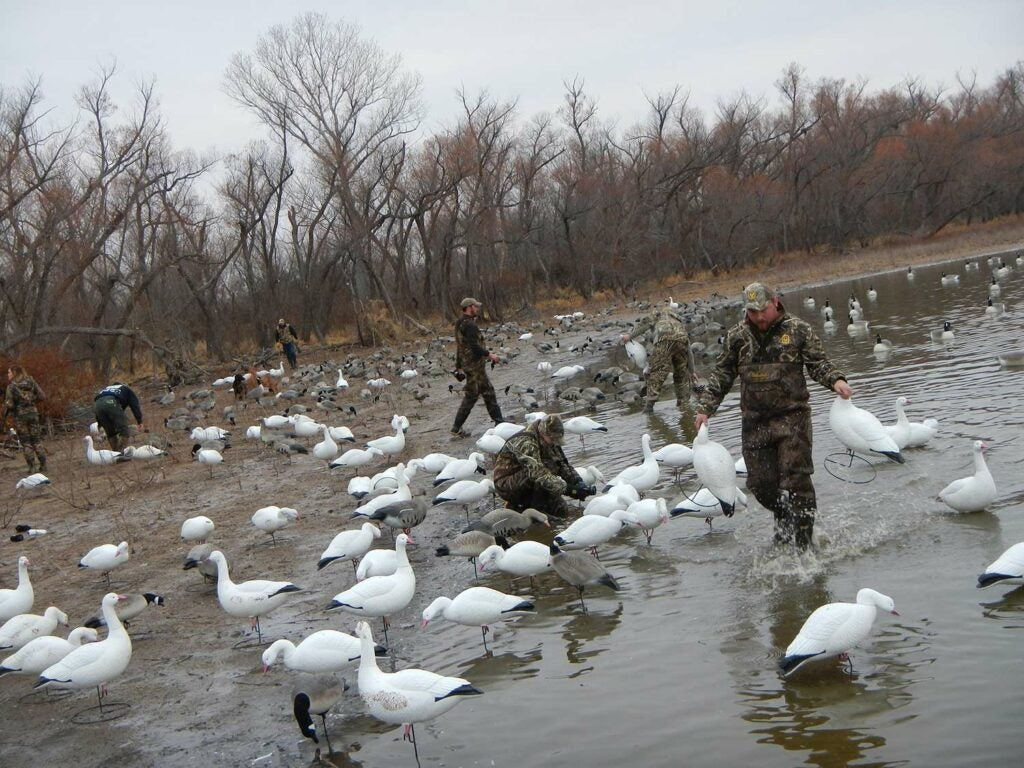 Hunters wading through a spread of ducks.