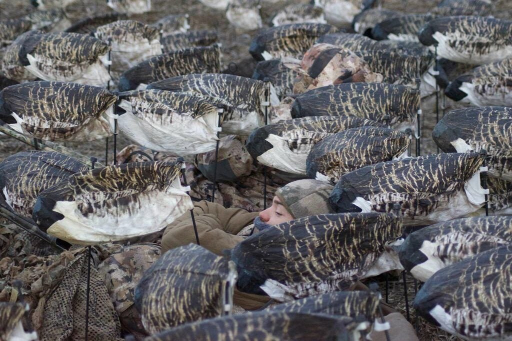 Hunter laying in a spread of goose decoys.