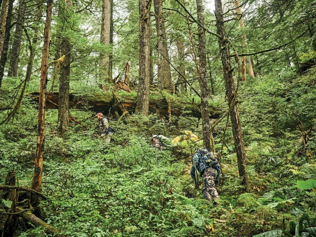 hiking-tongass-national-forest.jpg