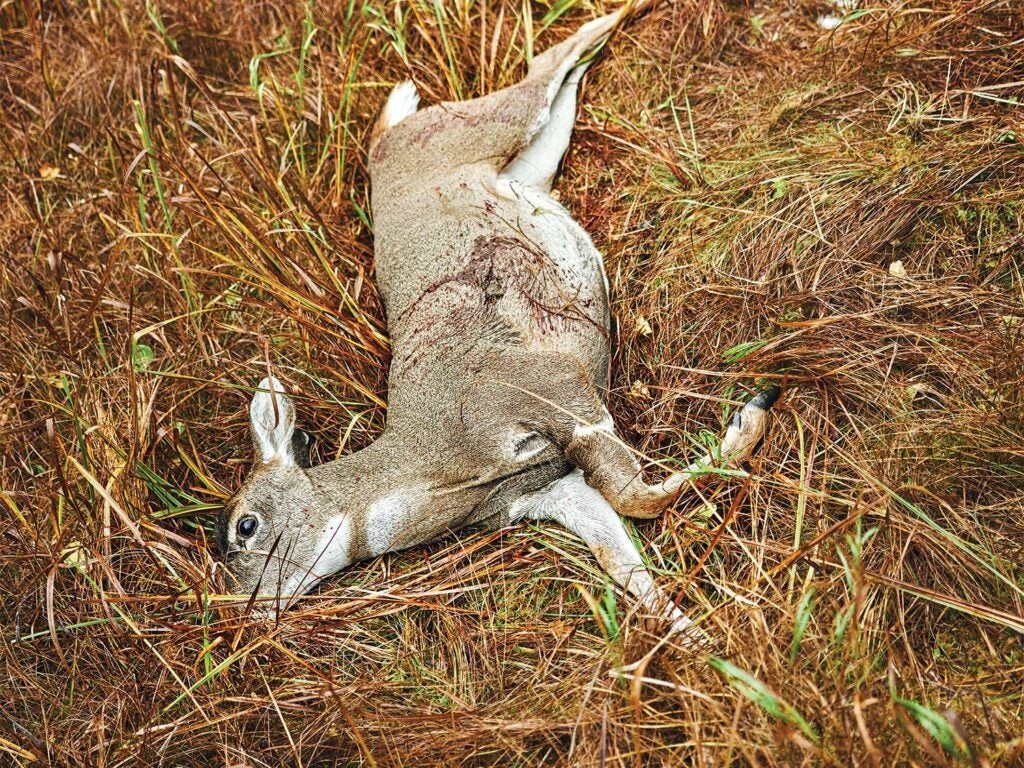 A blacktail deer down in Tongass National Forest.