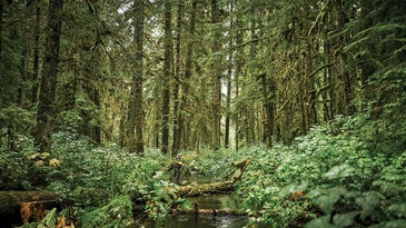 Alex Robinson fishing in the Tongass National Forest.
