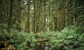 The Tongass National Forest is a Wilderness on the Chopping Block