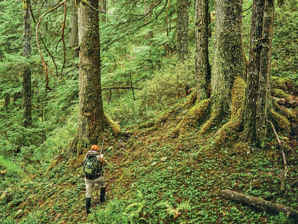 A person hiking through the Tongass National Forest.