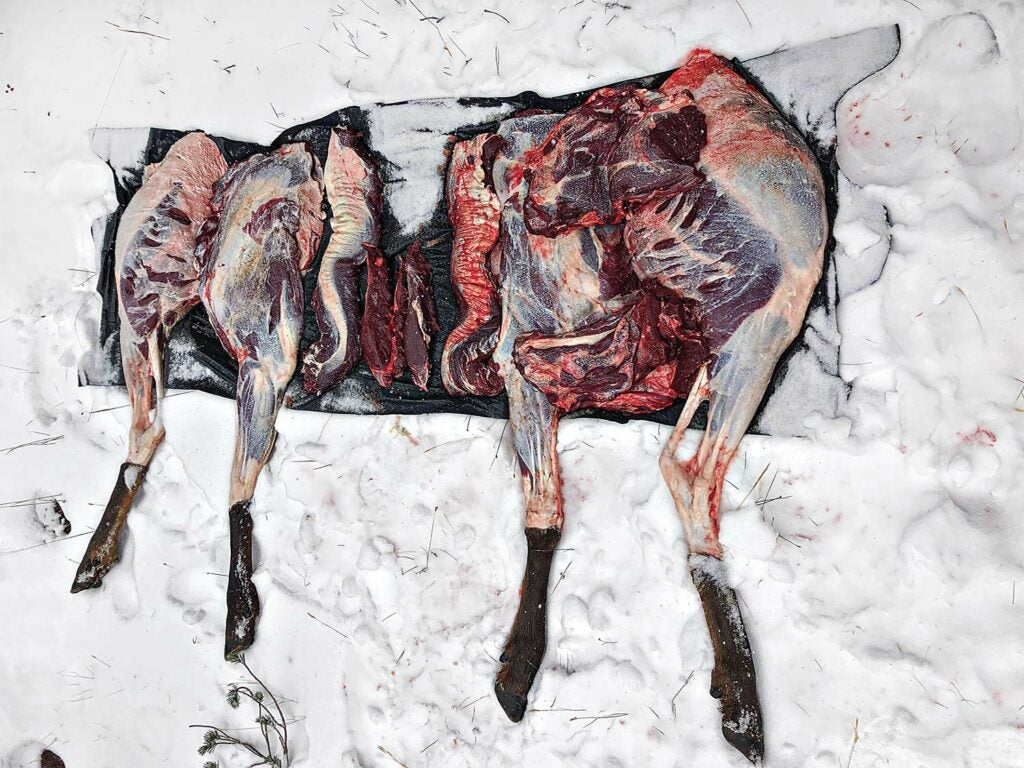 Quarters, backstraps, and scraps of an elk in an ice box.