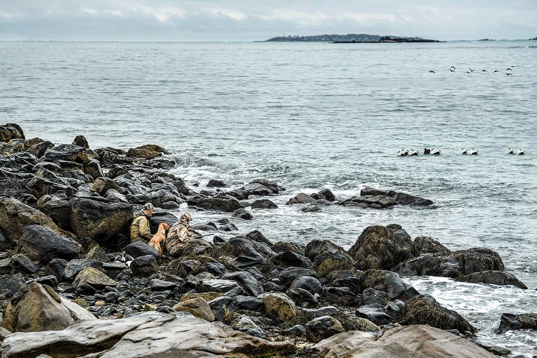 Hunters and a dog on on the New England coastline.