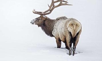 Elk Hunting a Secret Public-Land Spot in the Utah Backcountry