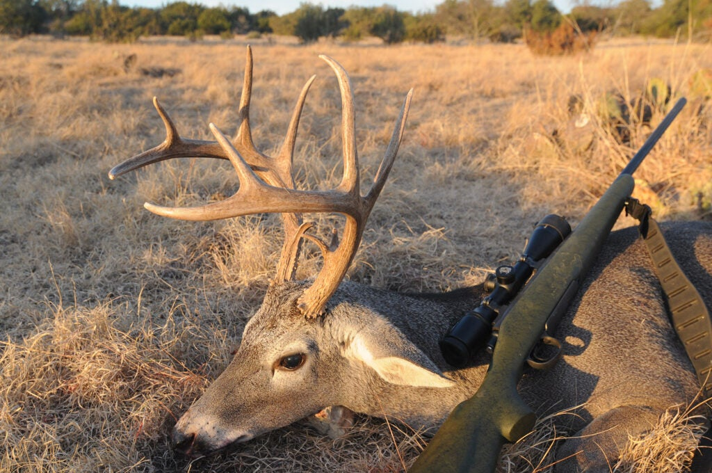 The author took this Texas buck with a Nikon riflescope.