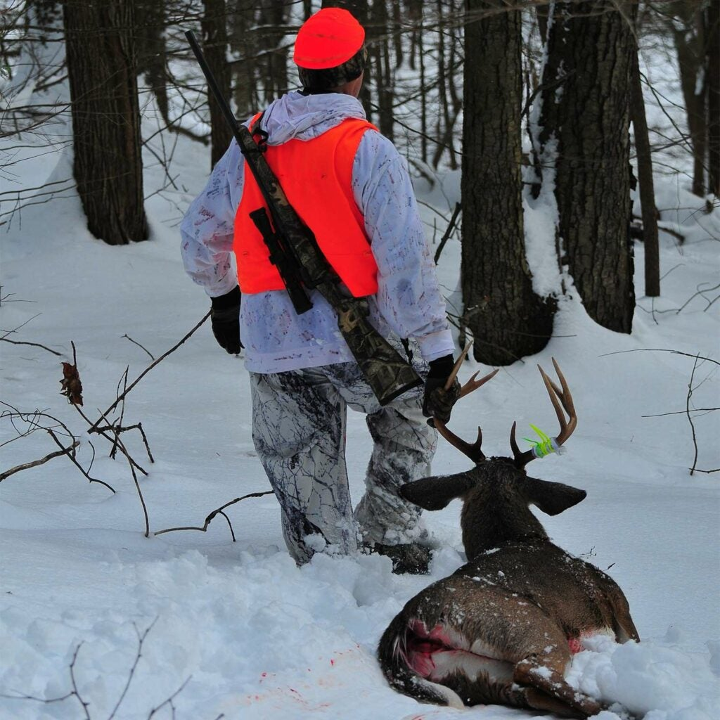 George Hamilton drags out a solid late-season buck he took by avoiding pressure from other hunters
