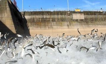 These 8 Aquatic Invasive Species are Threatening Fisheries Across the U.S.