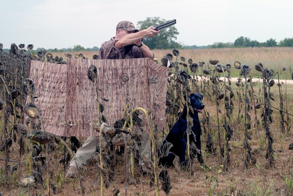 Hunter aiming shotgun from a blind.