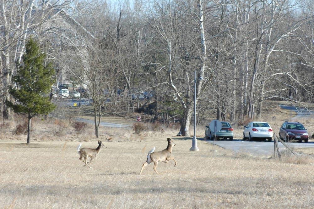 Deer running through a field.
