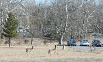 The Wild Game State Agencies Confiscate Does Not Go in a Dumpster