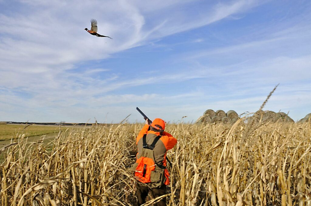 Hunter aiming a shotgun in a field.