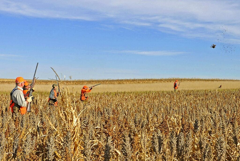 Hunters in a field pheasant hunting.