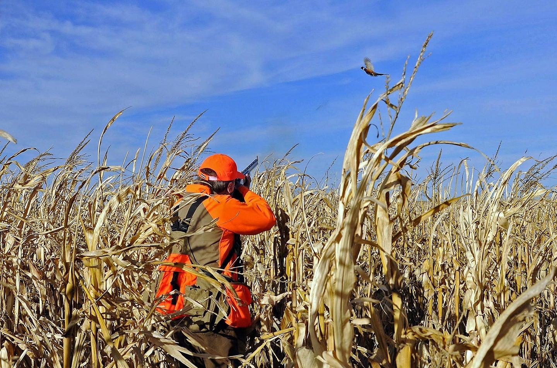 Hunter aiming shotgun at a pheasant.