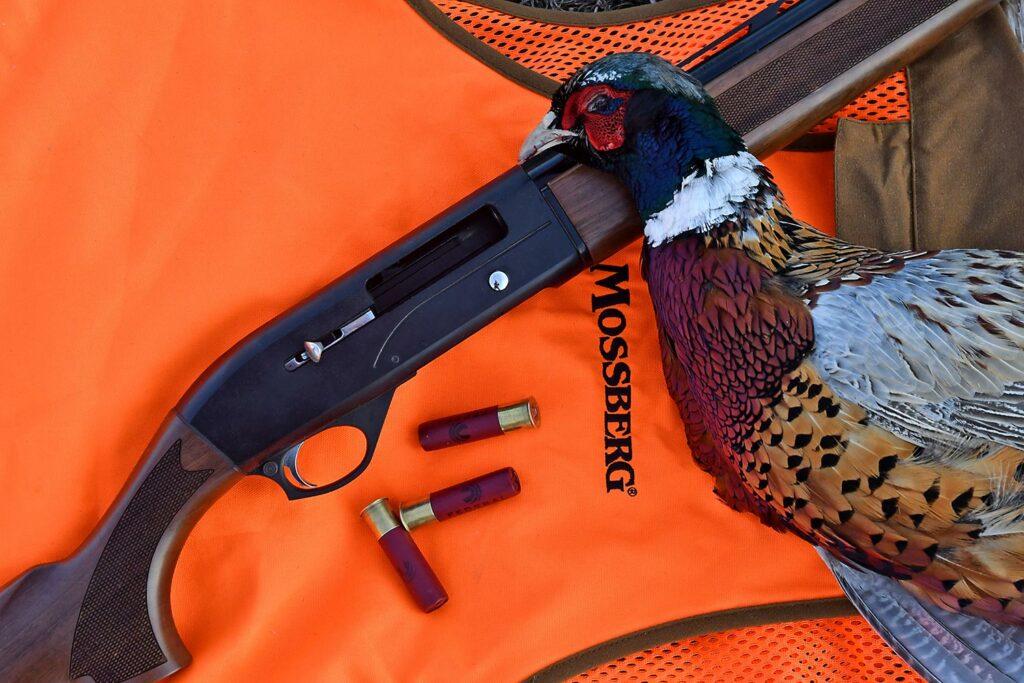 a Mossberg SA-28 shotgun and a pheasant.