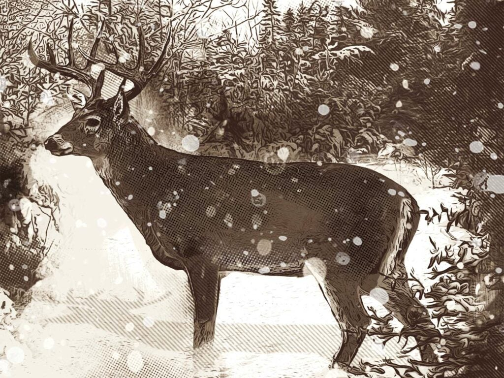 Illustration of a deer in the snow.