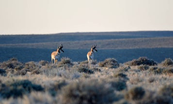 """Wyoming Considers Buying 1 Million Acres in a Deal that """"Could Be a Real Home Run"""" for Access"""