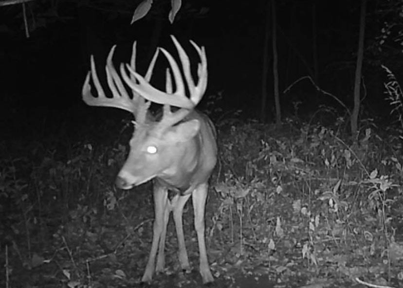 A nontypical whitetail buck photo on a trail cam.