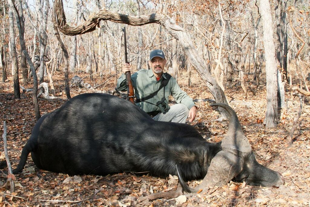 One shot from the beautifully balanced .416 Rigby was all this buffalo bull could take.