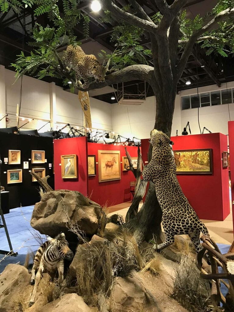 Brush Country Studios & Prairie Mountain Wildlife Studios cheetah mounts