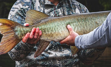 Want to Catch a Muskie on a Fly Rod? Never Give Up