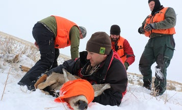 5 Things Researchers Learn From GPS Collars
