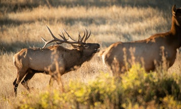 MAPLand Act Would Move Public Land Access into the Digital Age (and Make it Easier to Find Hunting Spots)