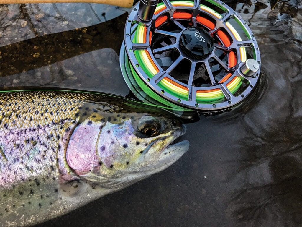 Trout next to a fly fishing reel