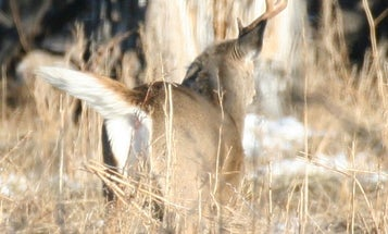 18 Best Tips For Finding Your First Shed Antler