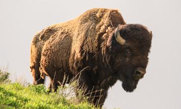 Will Yellowstone Park Close to Public Visitation?