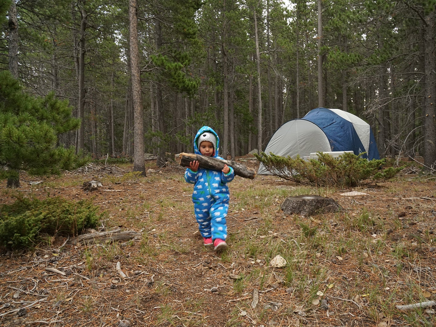 child carrying a log in woods.