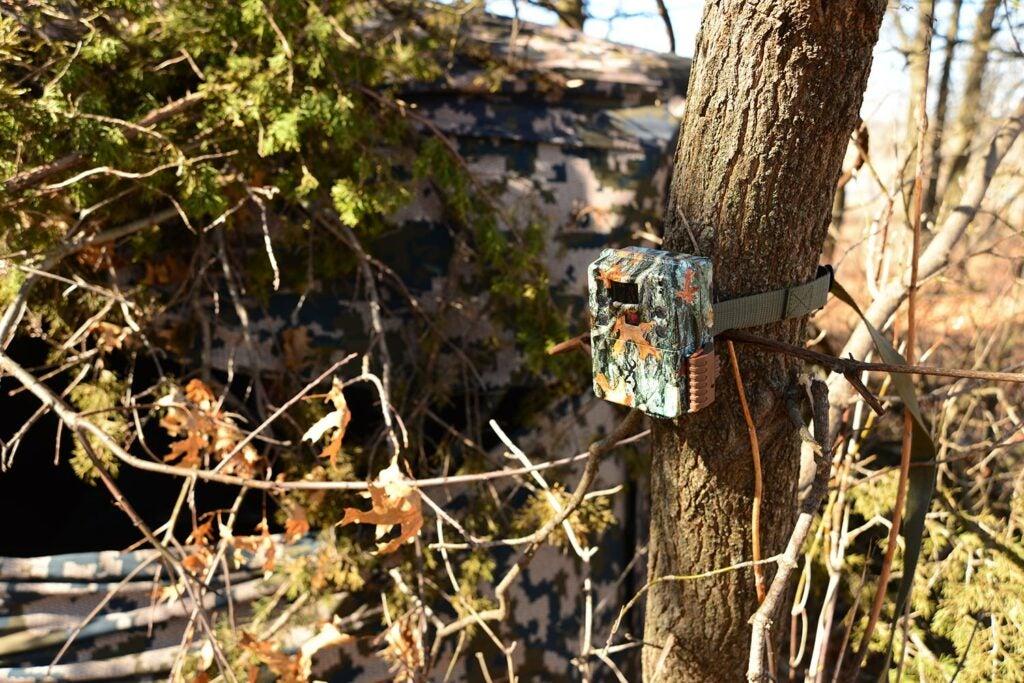 A trail camera on a tree.