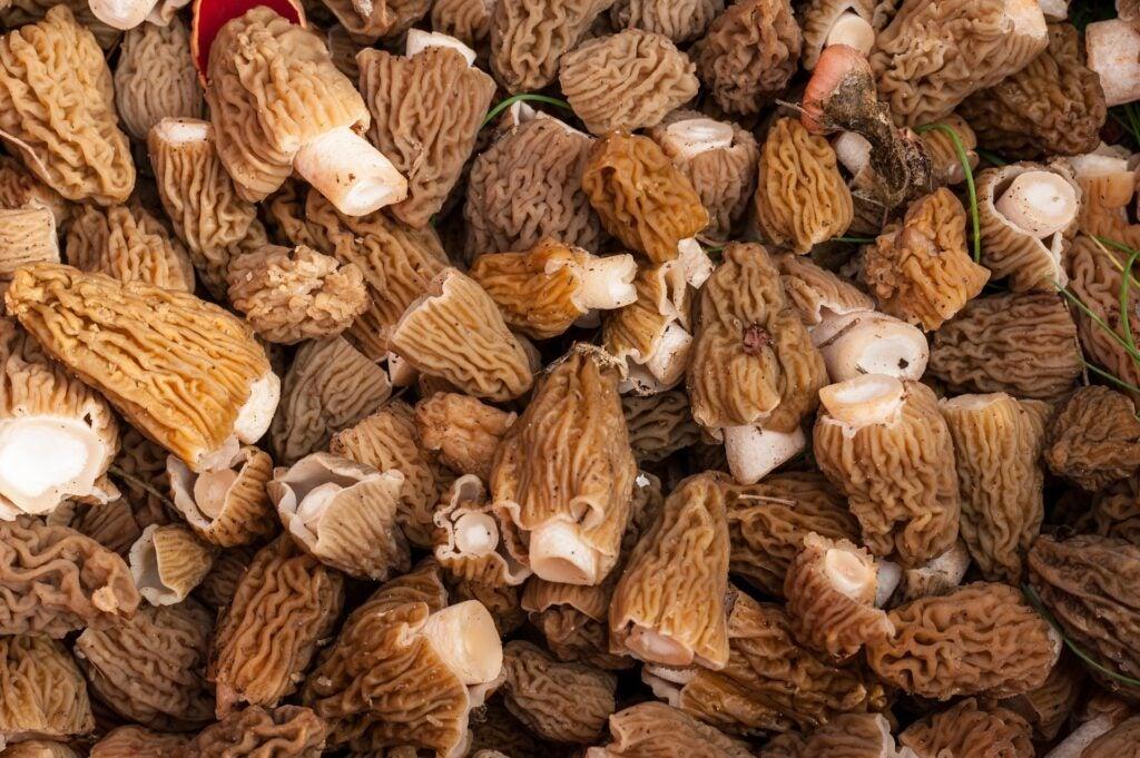 a pile of morel mushrooms.