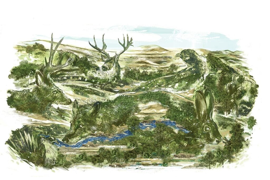 Illustration of a landscape painted in the shape of animals.