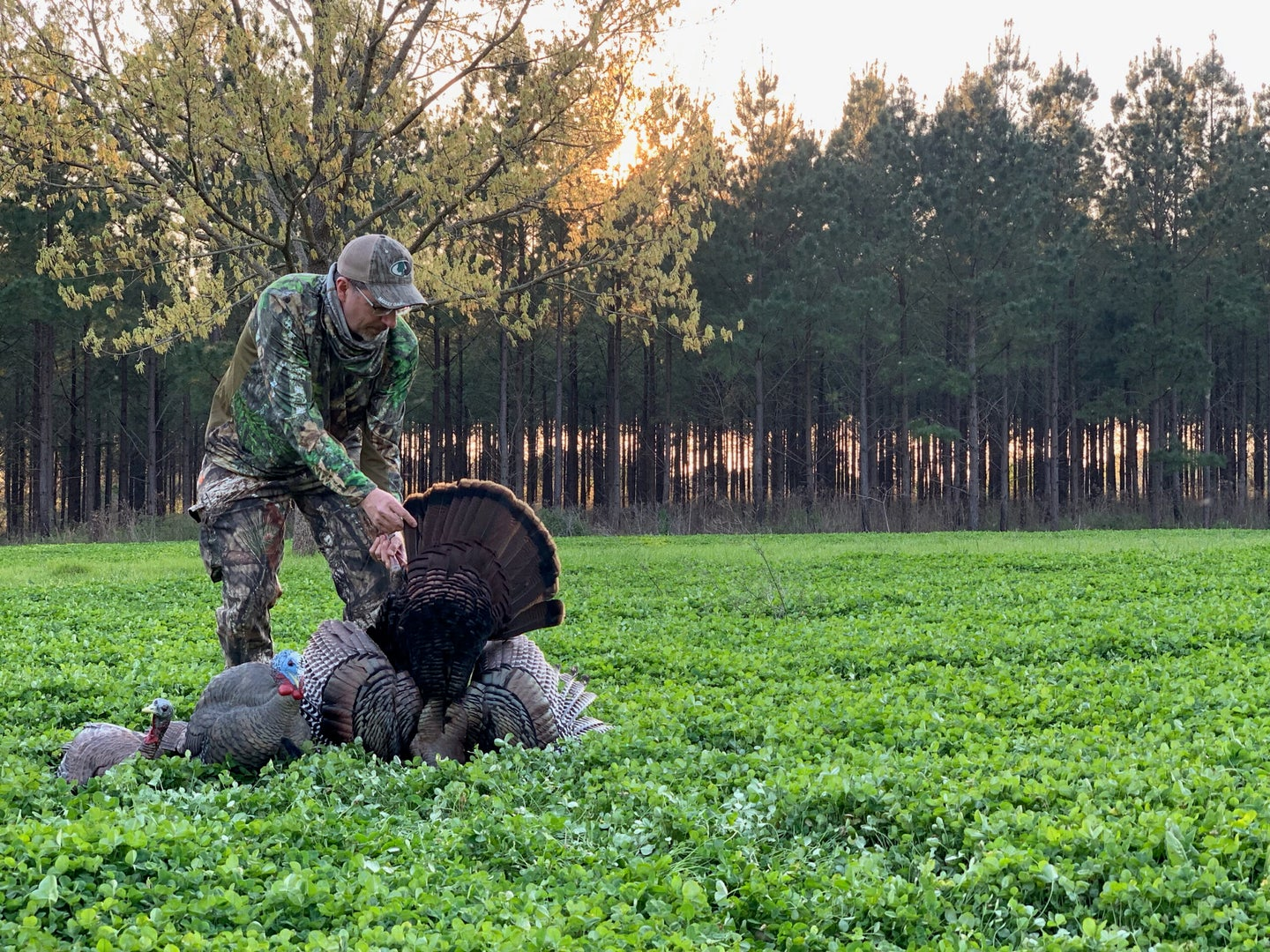 Mid-spring food plots are great places to call in gobblers.