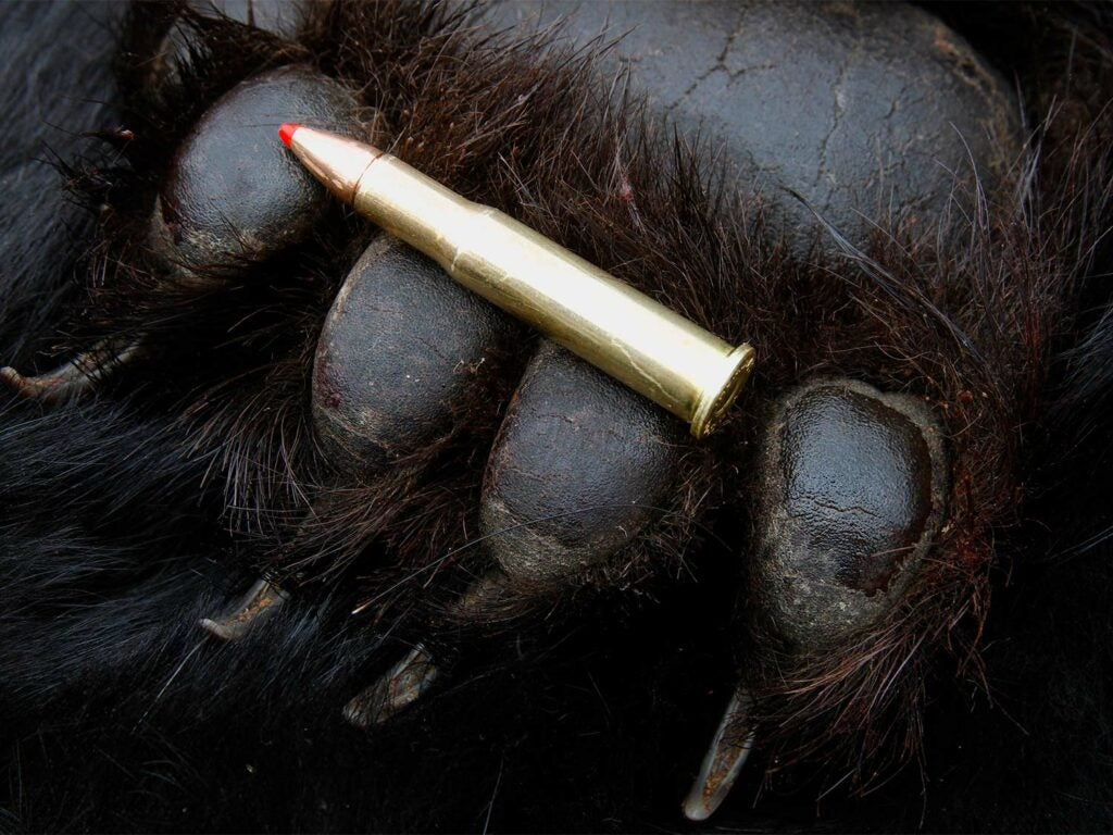 Bear paw ammo.
