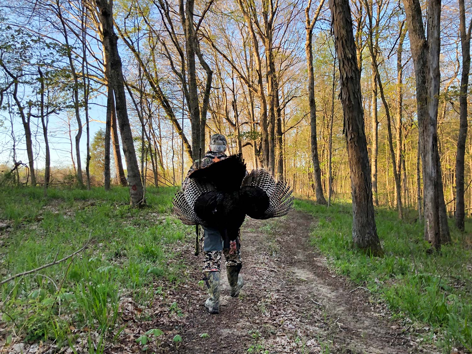 Hunter walking through the woods with a turkey.