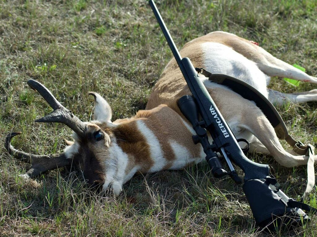 Antelope with a Bergarra B-14 rifle.