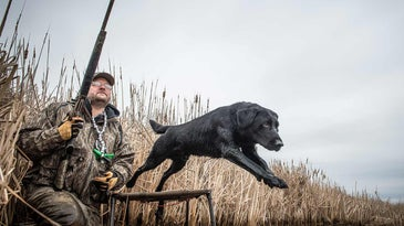 A man with a gun by a river while a black lab leaps into the water.