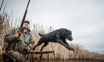 7 Top Hunting Dog Training Tips from World-Class Experts