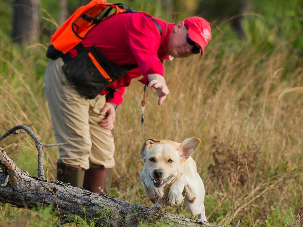 A man in red trains a hunting dog.
