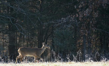 How Hunters Can Help During a COVID-19 Winter: Shoot More Deer, and Donate the Venison