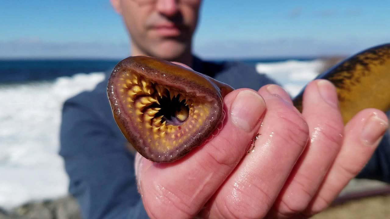 A man holding up a sea lamprey.