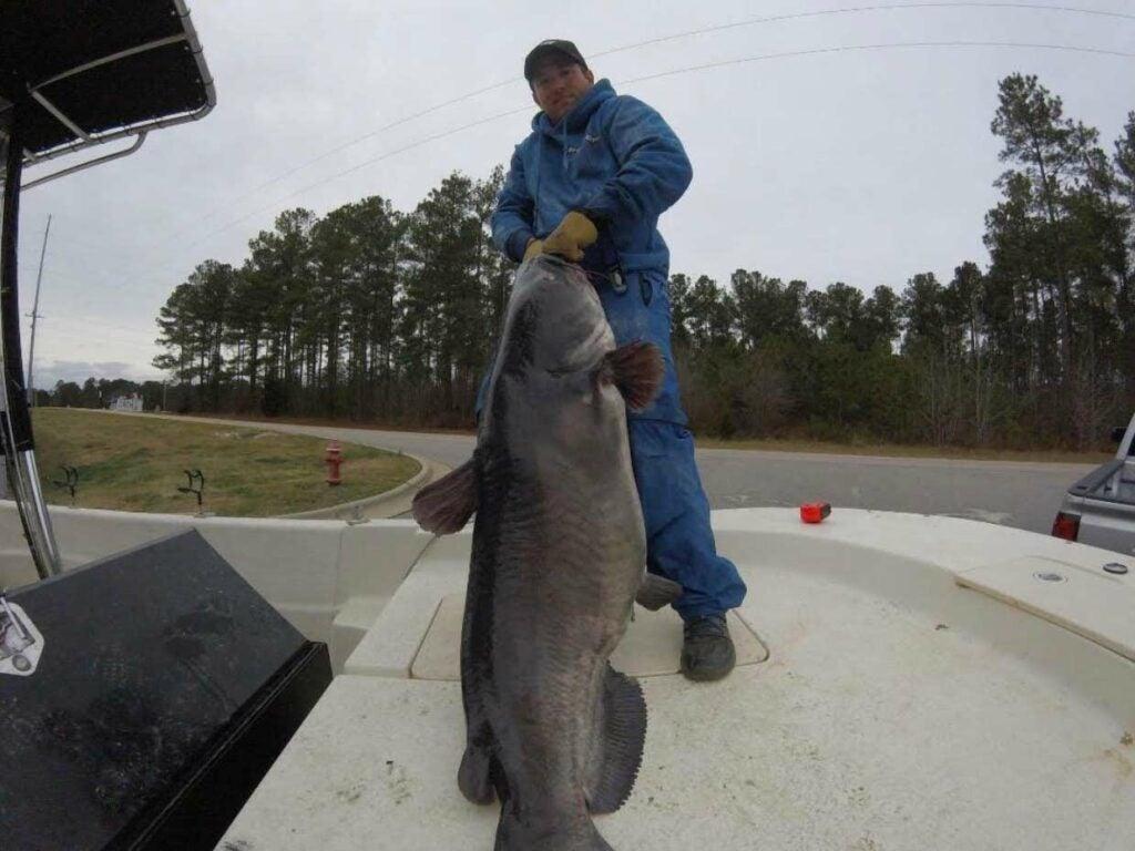 An angler holding up a record Lake Gaston blue catfish.