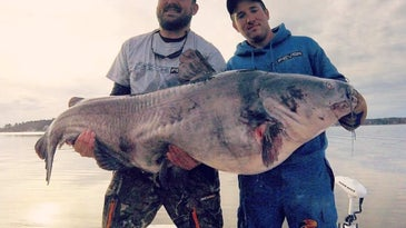 Two anglers holding up a large blue catfish.