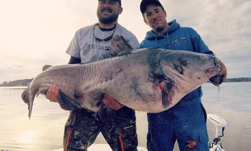 How to Catch a 100-Pound Catfish